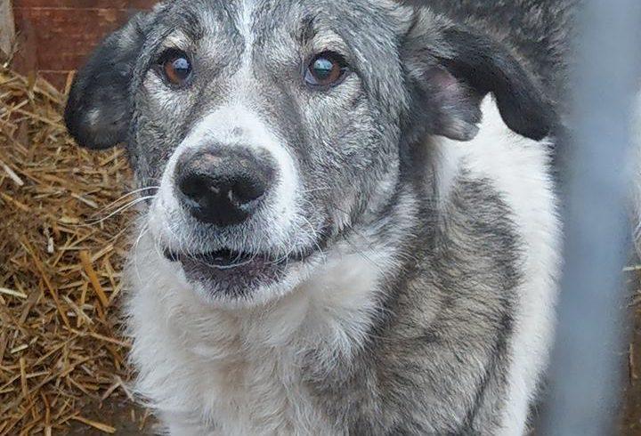Unser Hund des Tages: Kalle