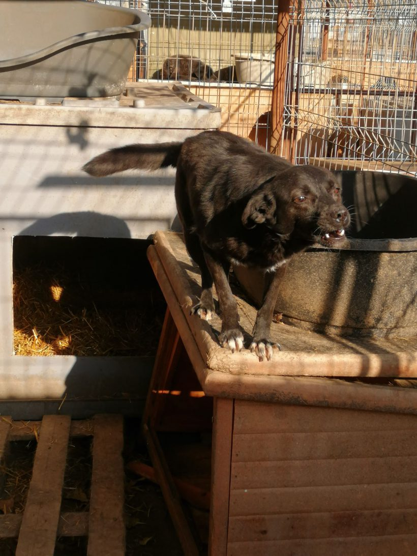 Tilly ca. 40 cm – vermittelt