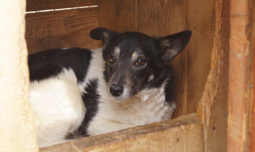 Unser Hund des Tages: Leesha