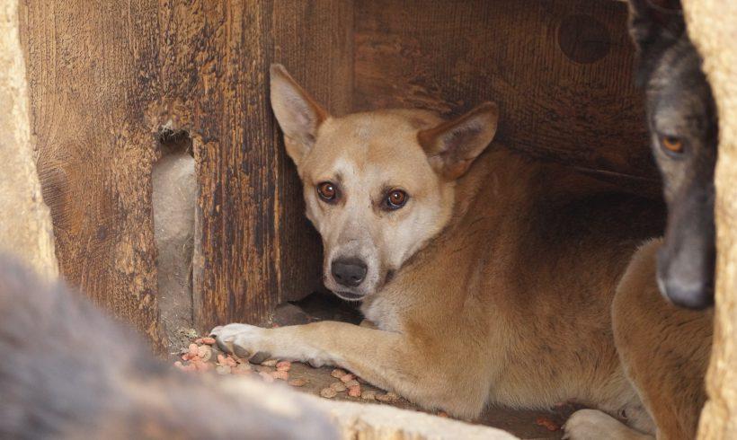 Unser Hund des Tages: Teddy