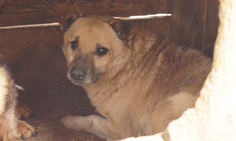 Unser Hund des Tages: Bailey