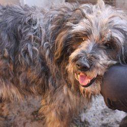 Unser Hund des Tages: Cayenne