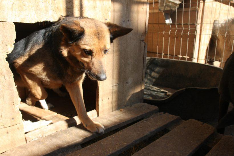Bertie ca. 45 cm – hofft auf ein Zuhause