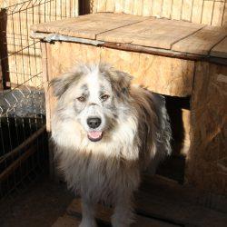 Unser Hund des Tages: Beauty