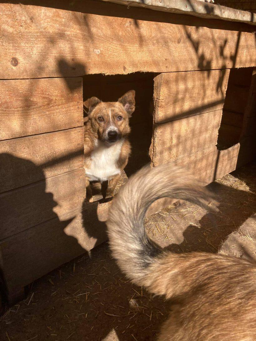 Foxy ca. 35 cm – braucht Sicherheit