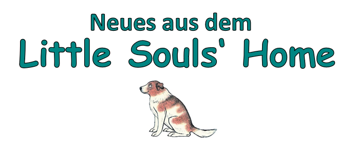 News aus dem Little Souls' Home vom 26.02.21 – 02.05.21