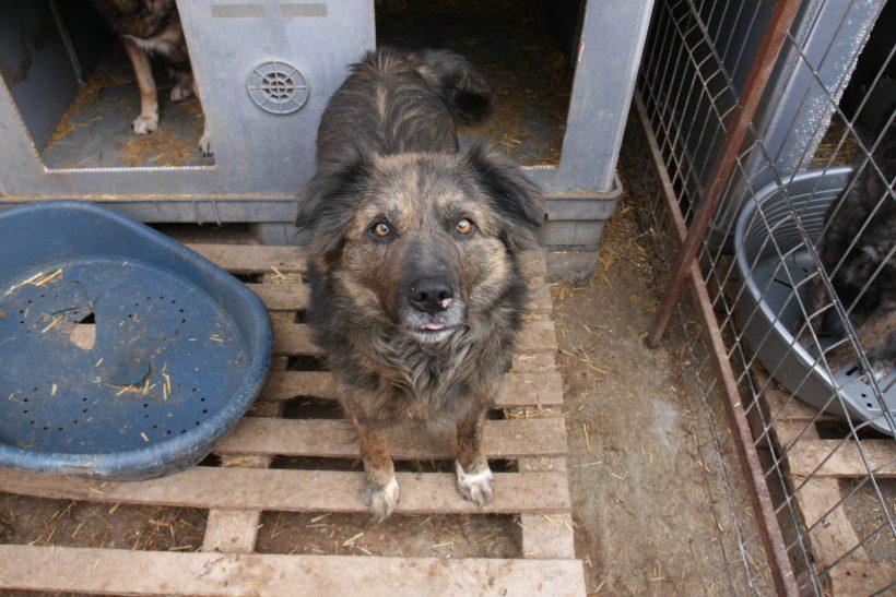 Ihre Stimme für Ihren Patenhund: Sergeant Smooch
