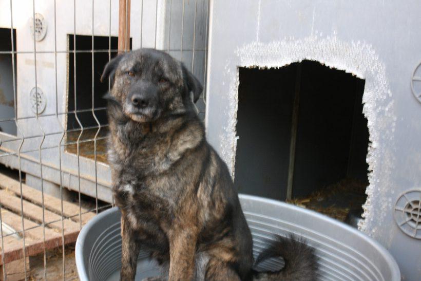 Bobby ca. 45 cm – Übernahme durch das Tierheim Bonn