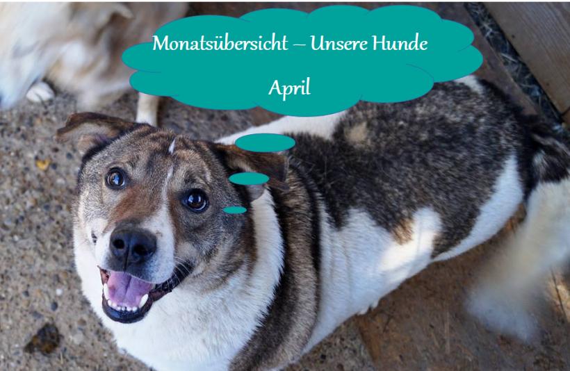 01.05.2020 – Monatsrückblick – Unsere Hunde April