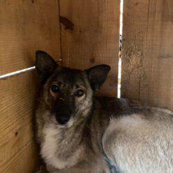 Unser Hund des Tages: Fernanda