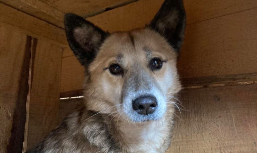 Unser Hund des Tages: Anouk