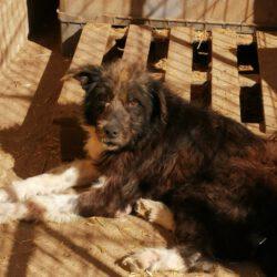 Unser Hund des Tages: Dombrowski