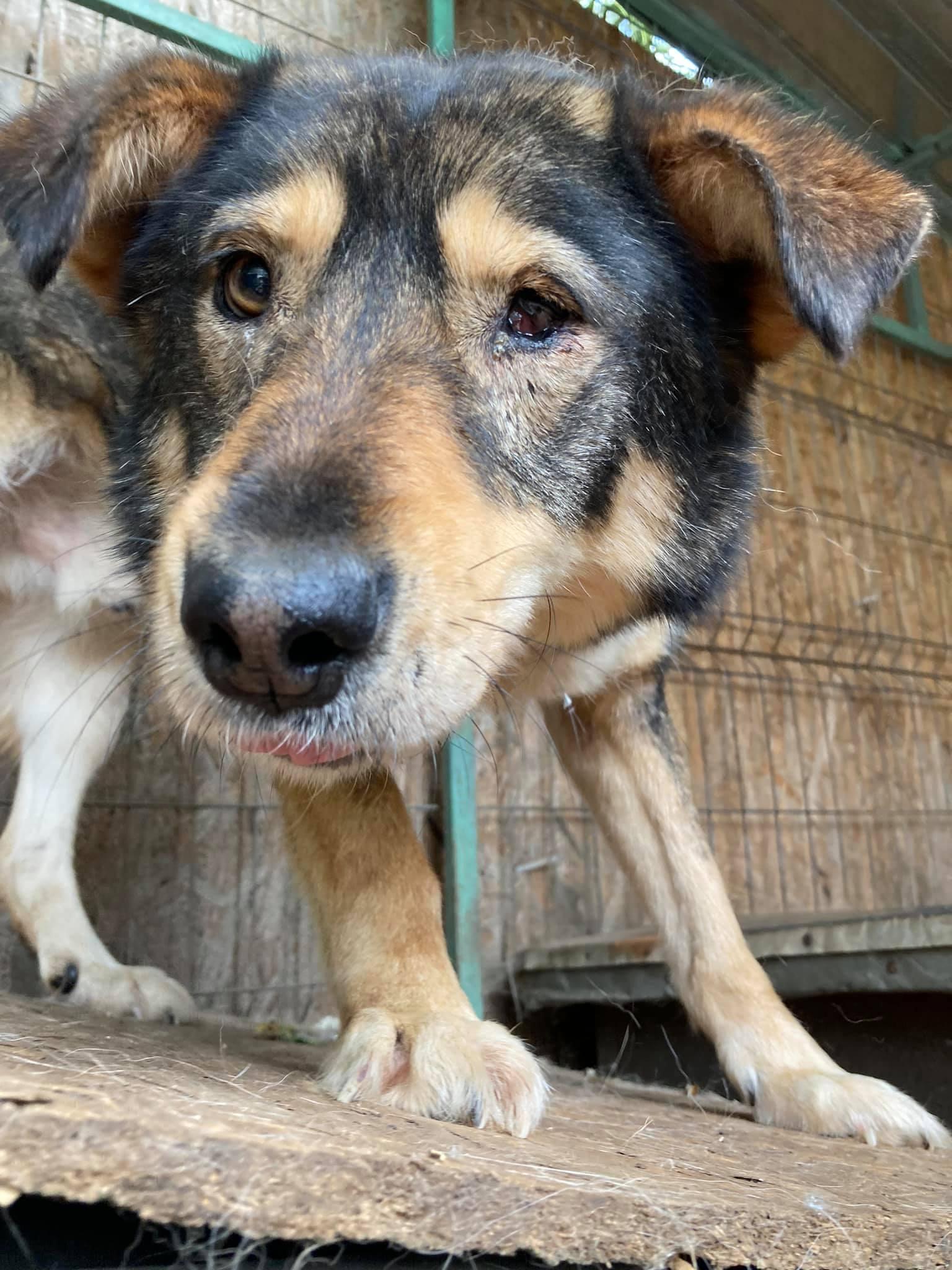 Aiko M ca. 50 cm – wünscht sich ein besseres Leben