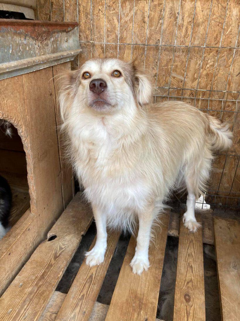 Laika ca. 47 cm – wünscht sich eine Familie