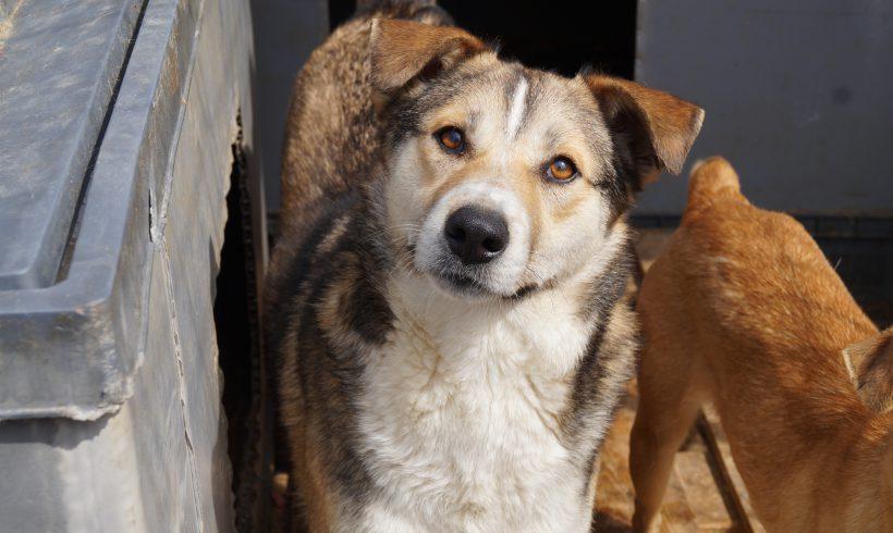 Unser Hund des Tages: Reyk