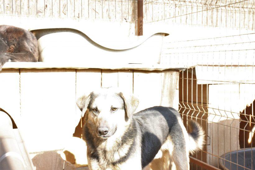 Fox ca. 50 cm – hofft auf ein besseres Leben