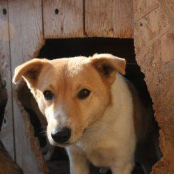 Unser Hund des Tages: Lara