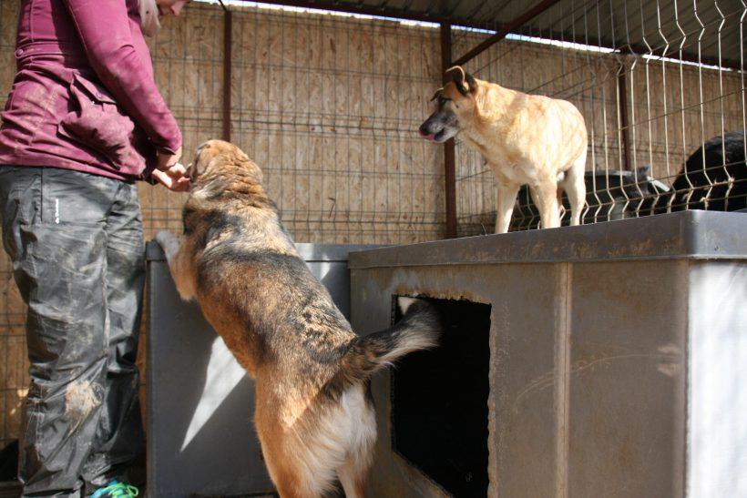 Chiara ca. 45 cm – Übernahme durch ein Tierheim