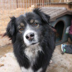 Unser Hund des Tages: Dario