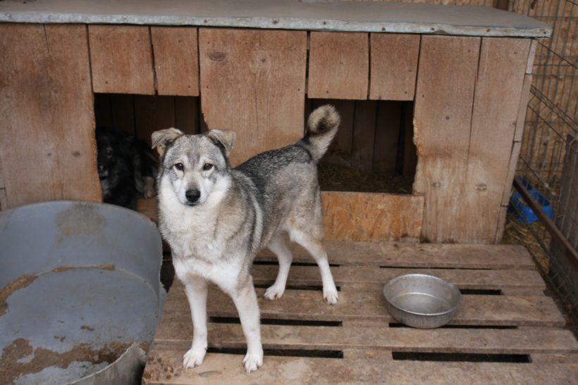Nuka ca. 50 cm – hofft auf seine Chance
