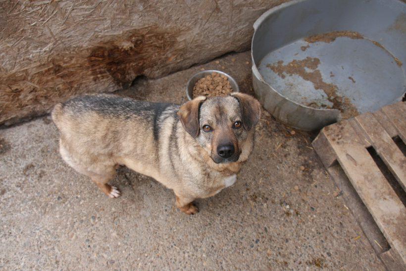 Benjo ca. 40 cm – hofft auf sein Glück