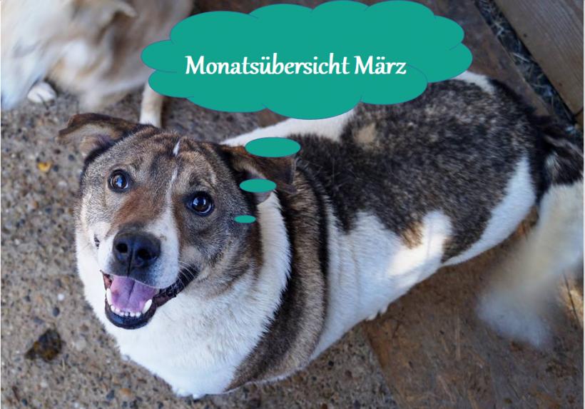 01.04.20 – Monatsübersicht Hunde März