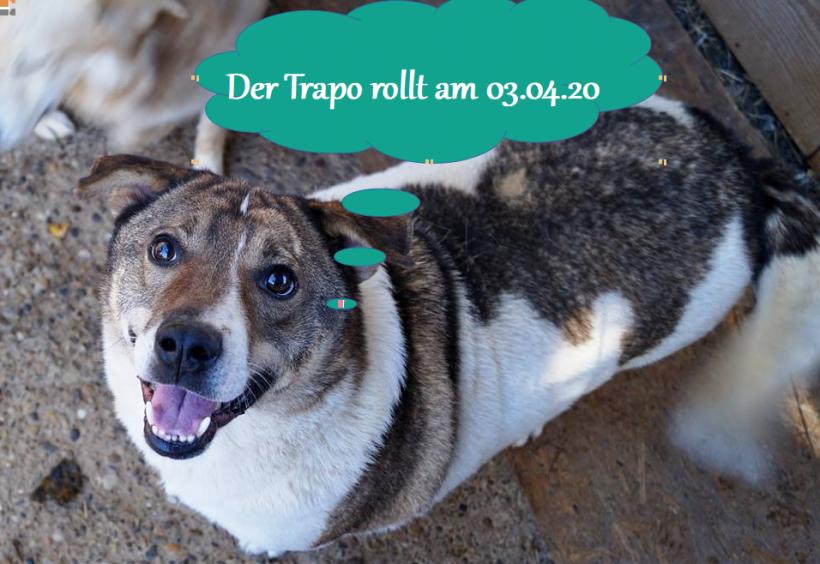 03.04.20 – Der Trapo rollt
