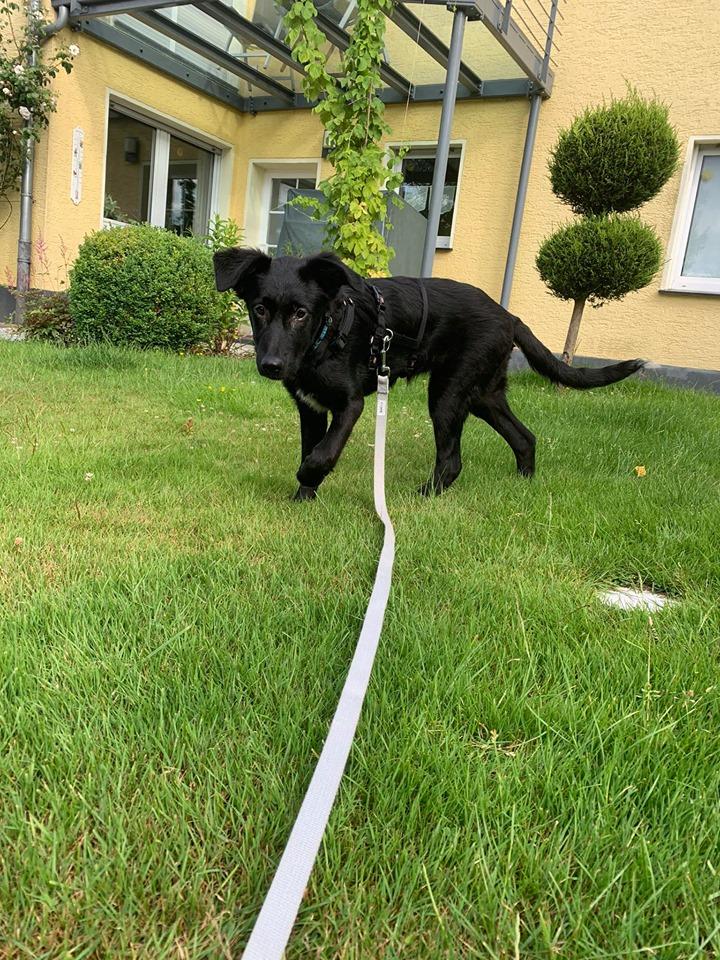 Romy ca. 47 cm (im Wachstum) – vermittelt