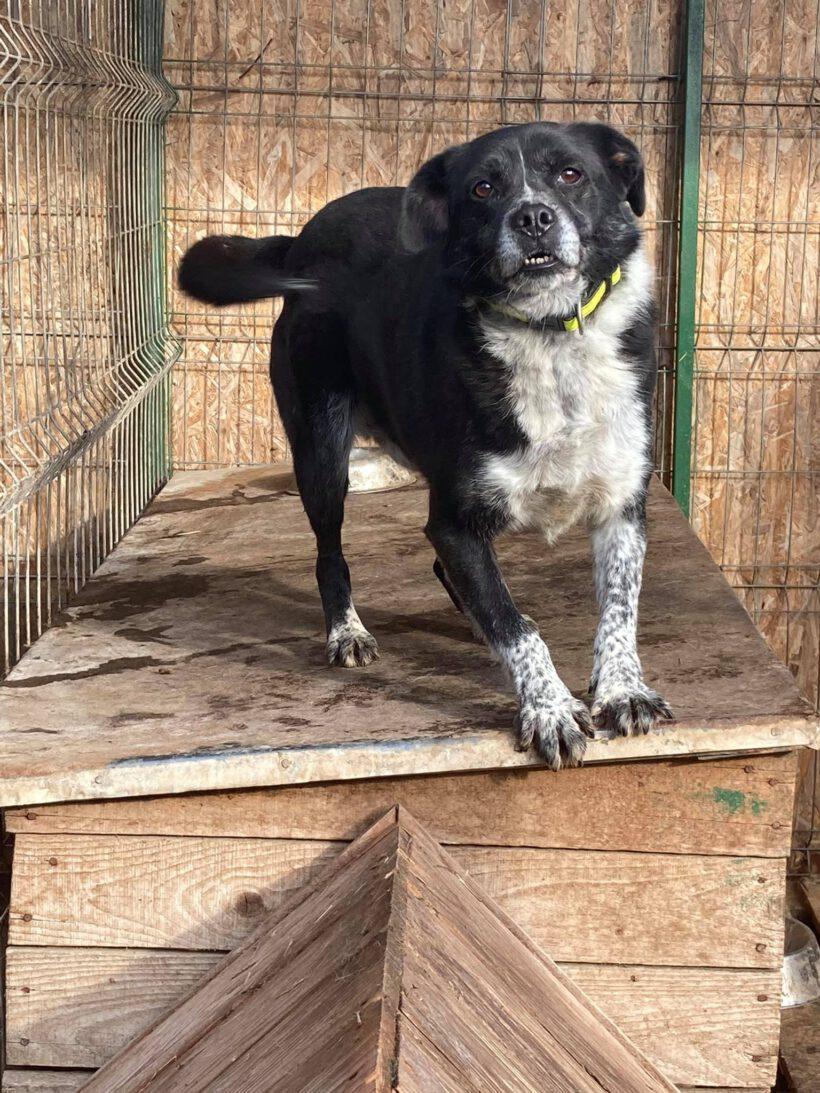 Bruno ca. 45 cm – wünscht sich mehr vom Leben