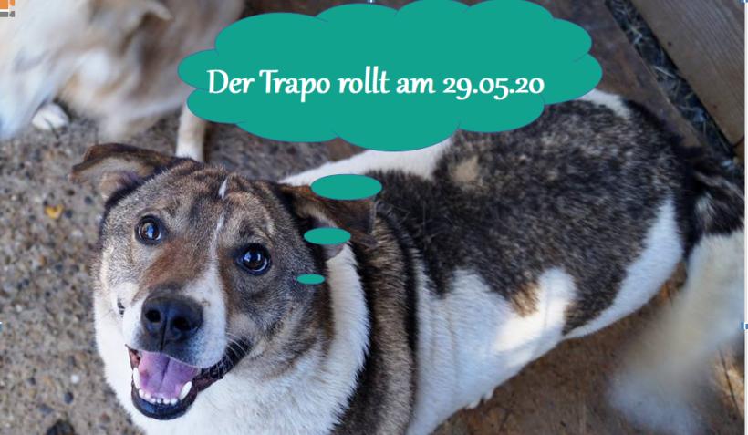 Der Trapo rollt wieder am 29.05.2020