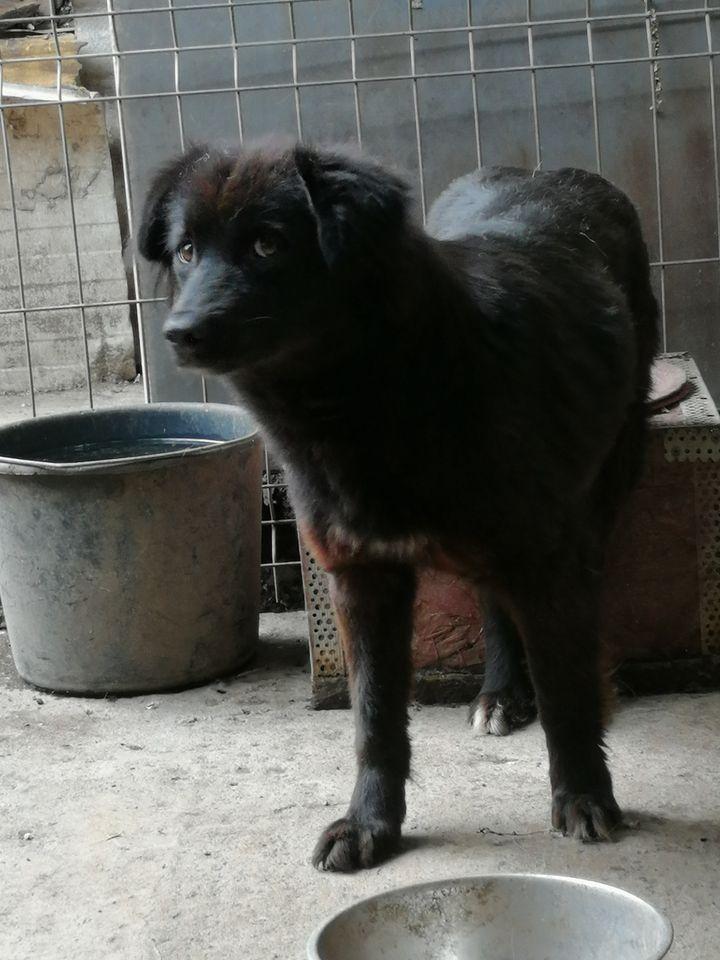Mara ca. 45 cm (im Wachstum) – wünscht sich Sicherheit (zur Pflege in 76327 Pfinztal)