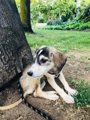 Molly ca. 30 cm (im Wachstum) – vermittelt