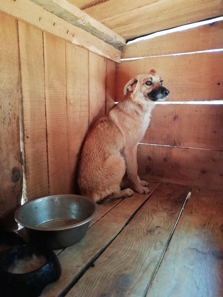 Luna ca. 47 cm – wünscht sich ein besseres Leben