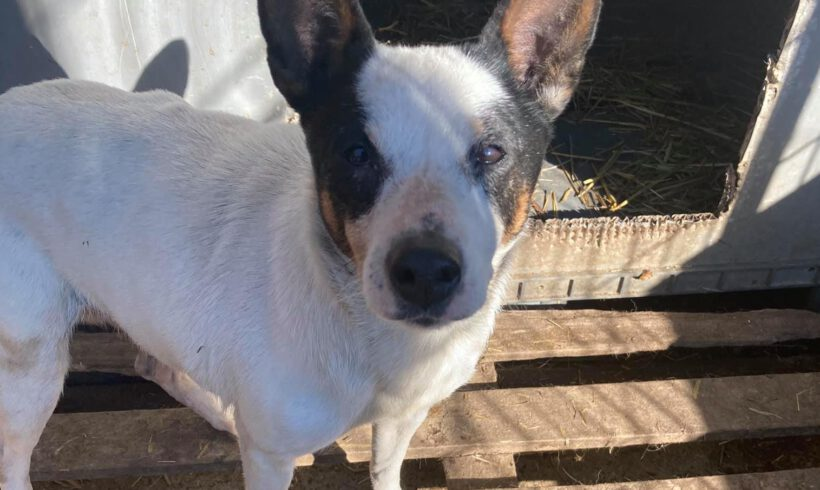 Unser Hund des Tages: Pilu