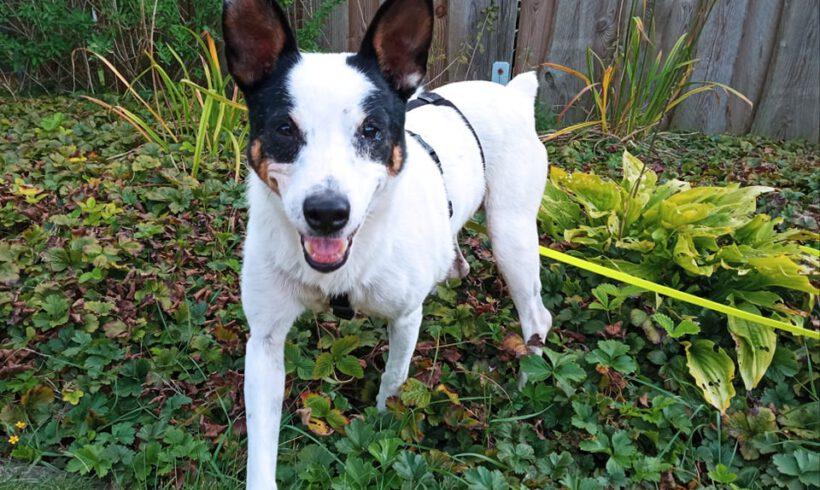 Unser Hund des Tages: Pflegi Pilu