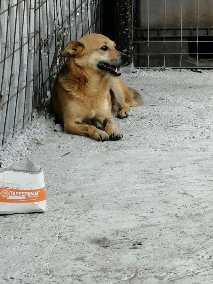 Hope K ca. 30 cm – Übernahme durch das Tierheim Bonn
