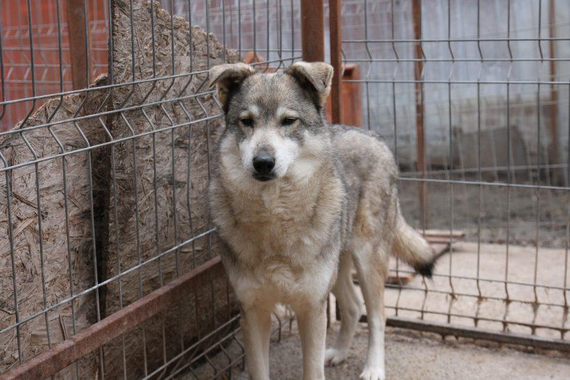 Ihre Stimme für Ihren Patenhund: Nuka