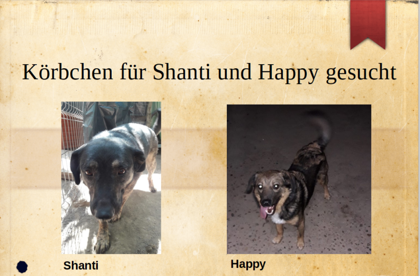 Zwei tolle Hunde auf der Suche nach einem Zuhause