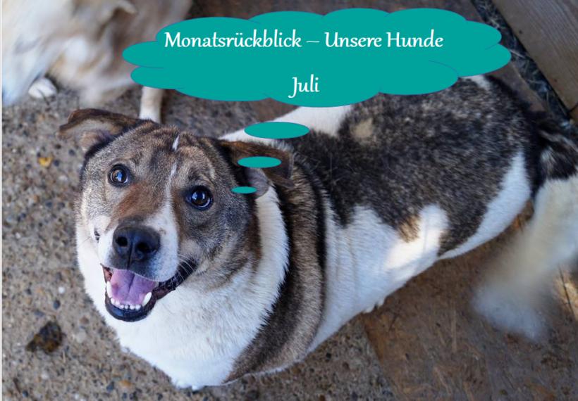 Monatsrückblick – Unsere Hunde im Juli 2020
