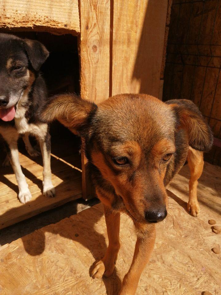 Hope W ca. 35 cm – Übernahme durch ein Tierheim