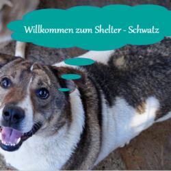 Unser Shelter – Schwatz am 26.09.2021