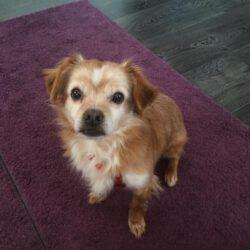 Unser Hund des Tages: Benny