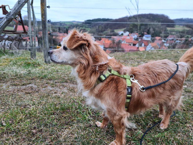 Benny ca. 30 cm – zur Pflege in 36199 Rotenburg an der Fulda