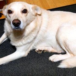 Unser Hund des Tages: Radu zur Pflege in 51143 Köln