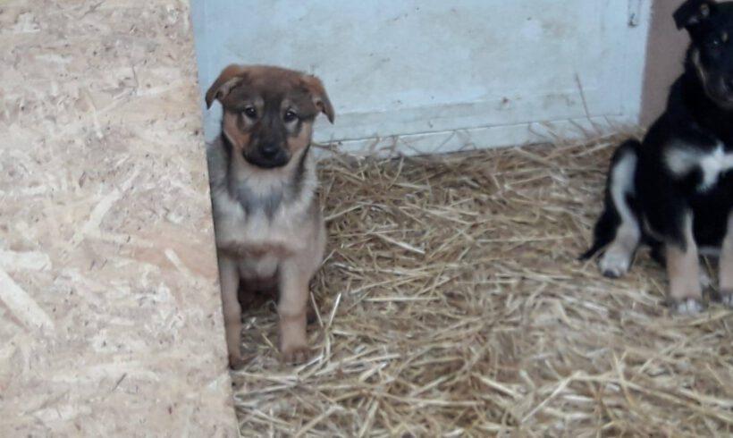 Unser Hund des Tages: Loki