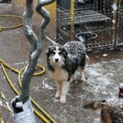 Unser Hund des Tages: Mogli