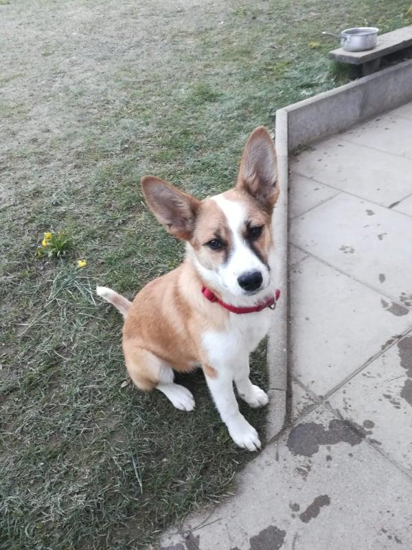 Lola ca. 40 cm (im Wachstum) – vermittelt