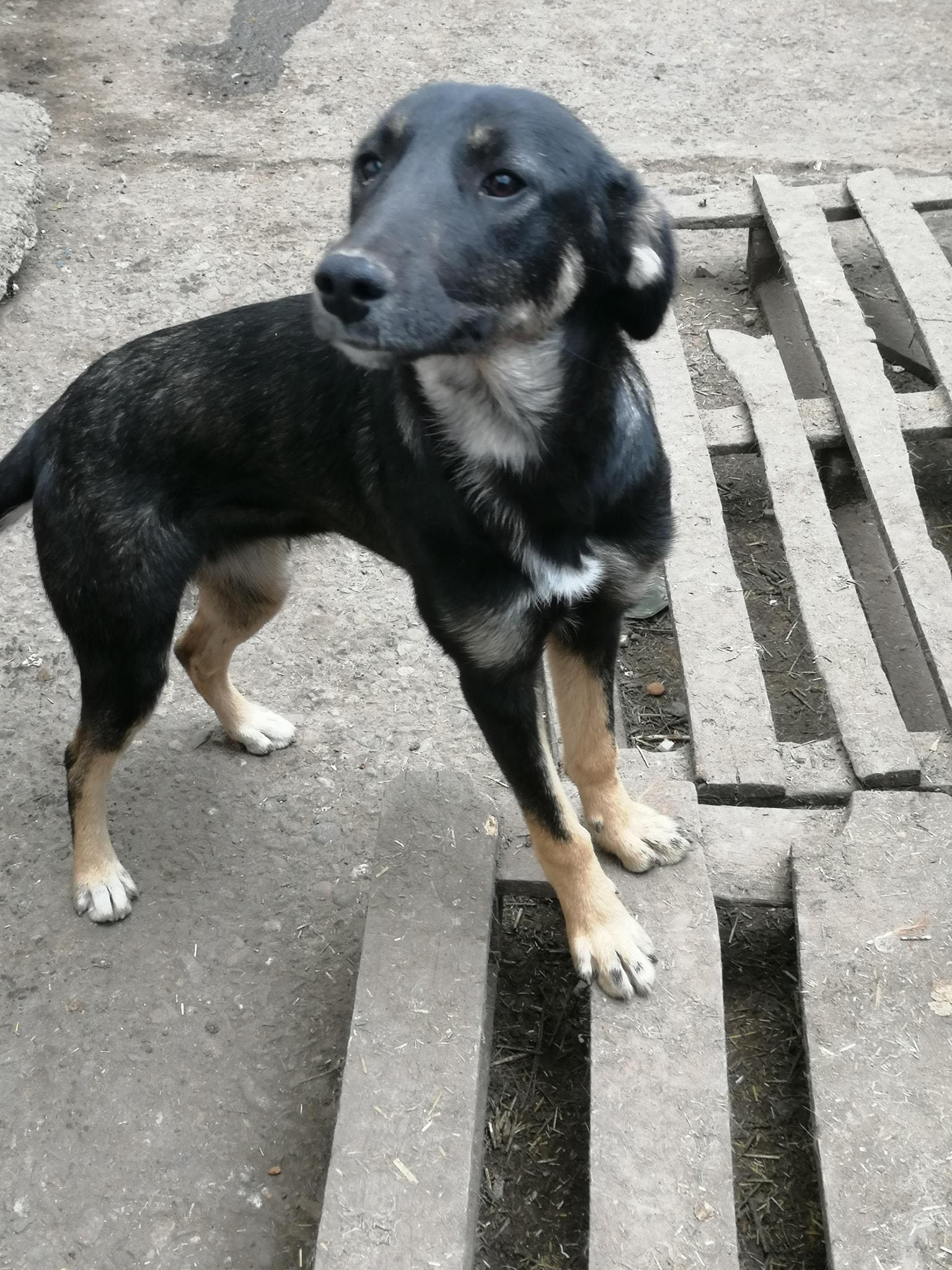 Mascha im Wachstum – das süße Hundemädchen