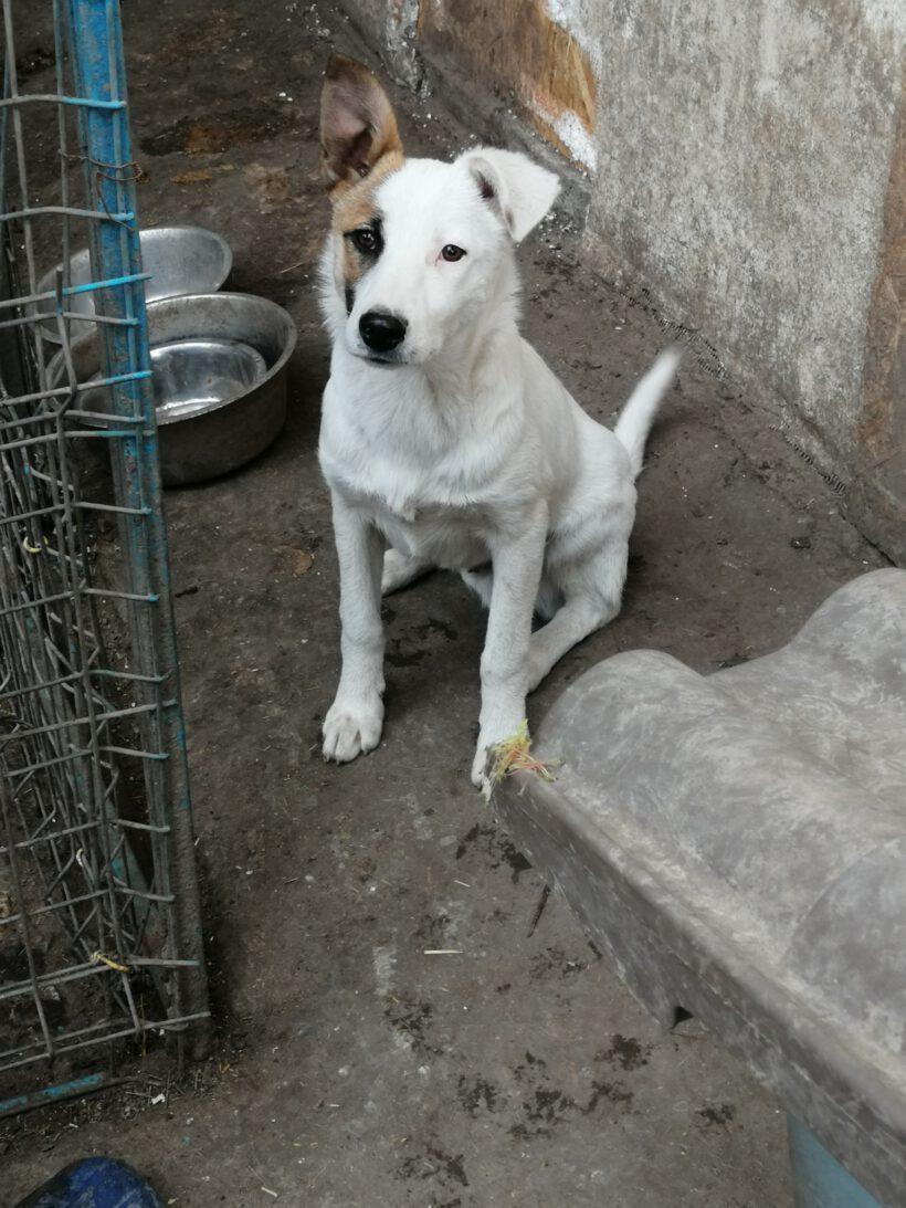 Felix ca. 40 cm (im Wachstum) – vermittelt