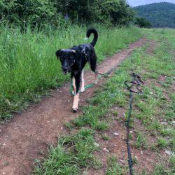Unser Hund des Tages: Mascha
